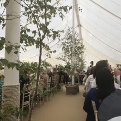 Birch trees decorating the poles in a traditional marquee built by Archers Marquees